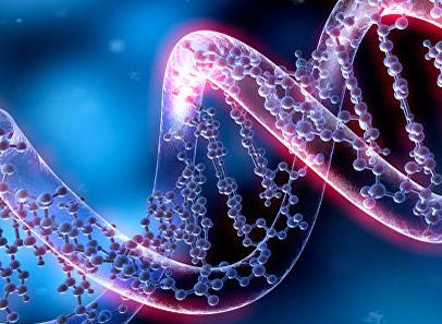 Новинки прайса - Генетические анализы